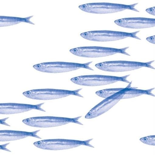 Paviot Napkin Sardines